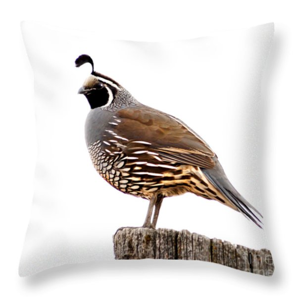 California Quail Throw Pillow by Robert Bales