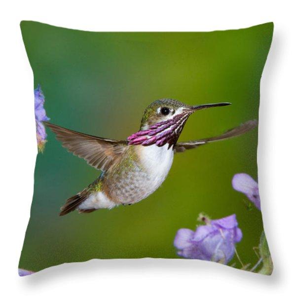 Calliope Hummingbird Throw Pillow by Anthony Mercieca