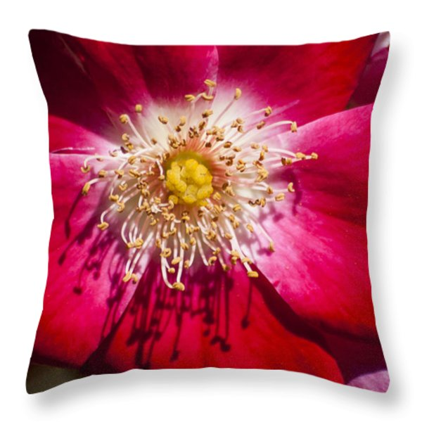 Camellia Throw Pillow by Carolyn Marshall