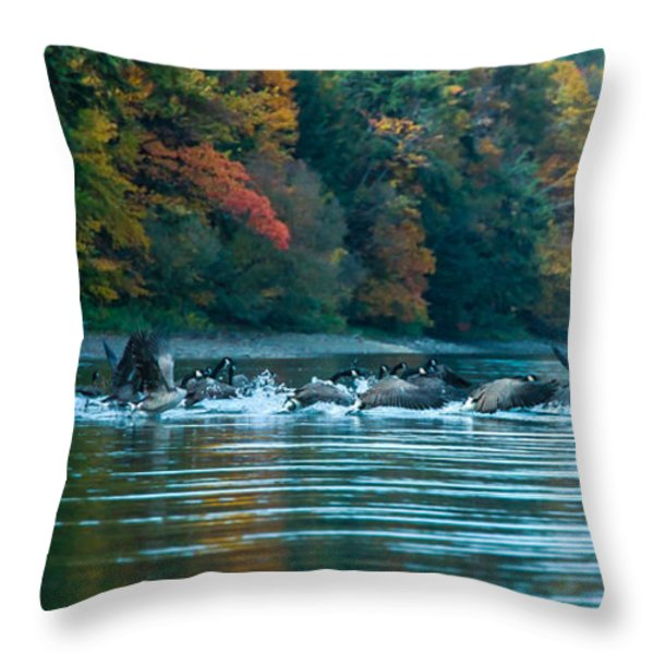 Canada Geese Taking Flight Throw Pillow by Steve Clough