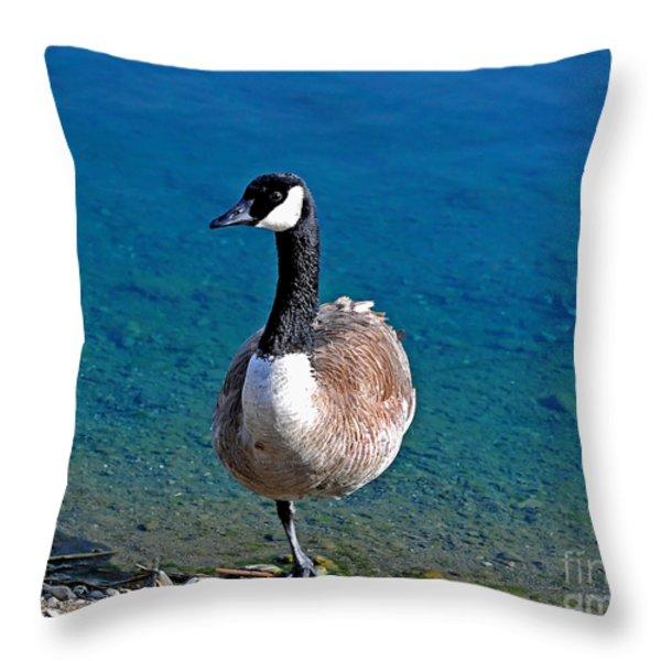 Canada Goose On One Leg Throw Pillow by Susan Wiedmann