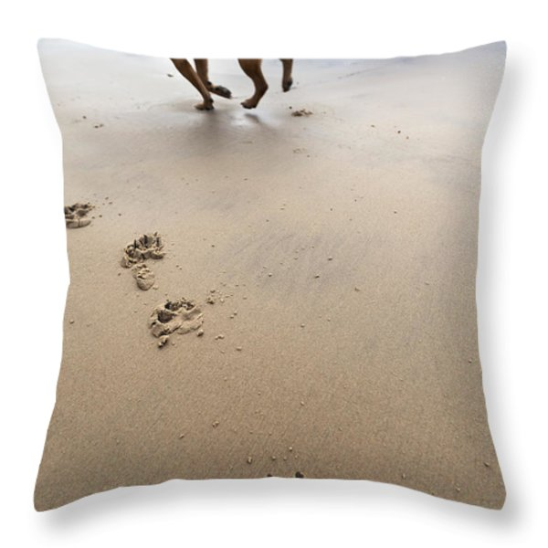 Canine Beach Jogging Throw Pillow by Eldad Carin