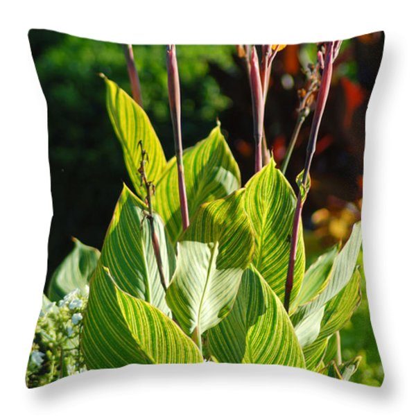 Canna Lily Throw Pillow by Optical Playground By MP Ray
