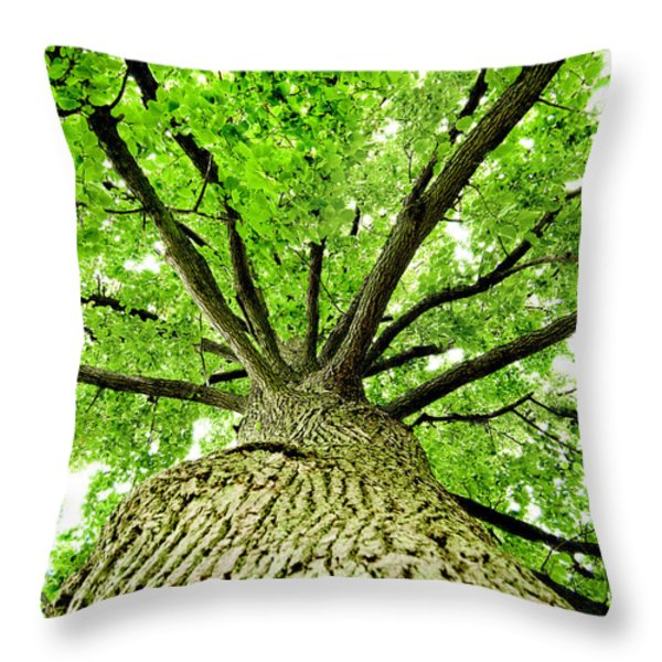 Canopy Throw Pillow by Greg Fortier