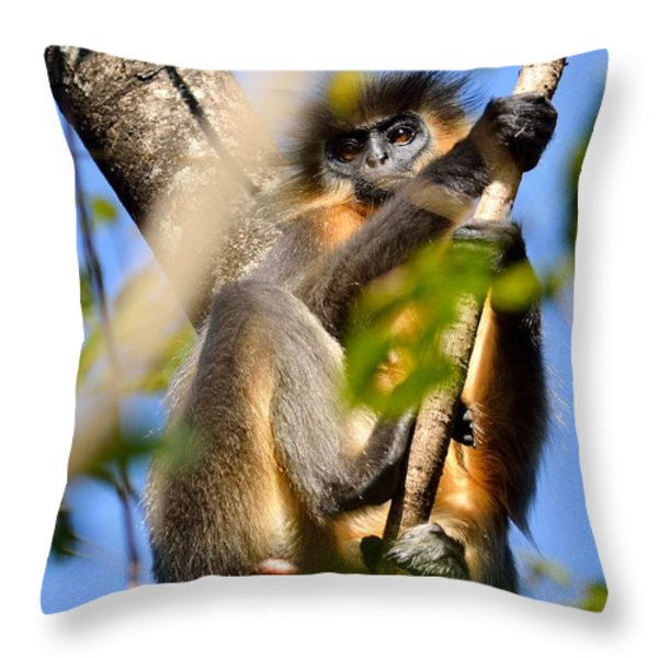 Capped Langur Throw Pillow by Fotosas Photography