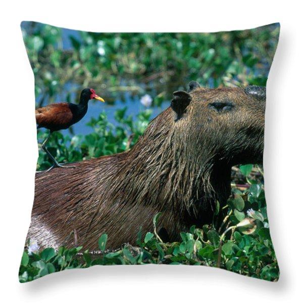 Capybara and Jacana Throw Pillow by Francois Gohier
