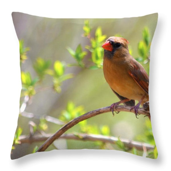 Cardinal In Spring Throw Pillow by Sandi OReilly