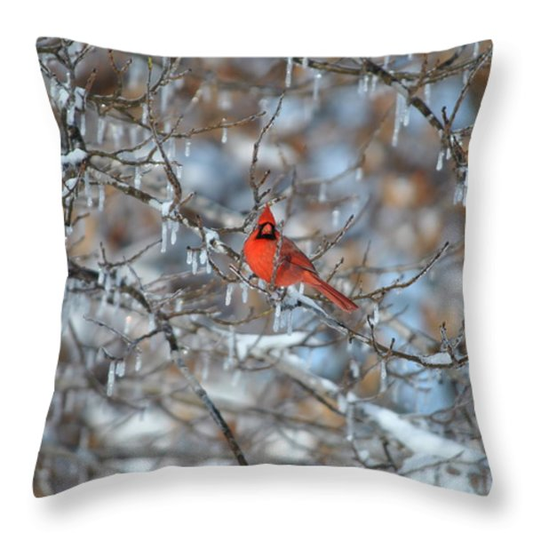 Cardinal In Winter Throw Pillow by Cim Paddock