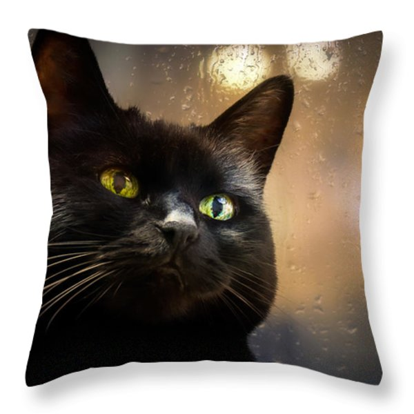 Cat In The Window Throw Pillow by Bob Orsillo