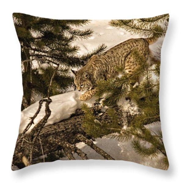 Cat Walk Throw Pillow by Priscilla Burgers