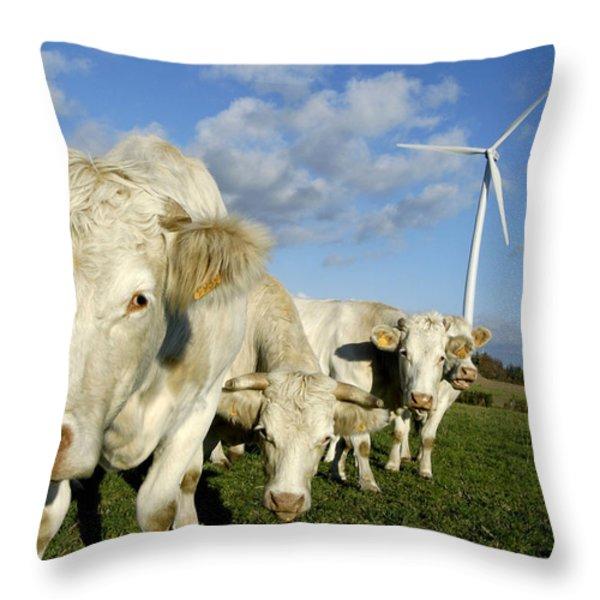 Cattle Throw Pillow by Bernard Jaubert