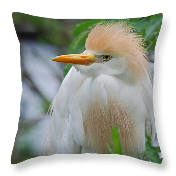 CATTLE EGRET Throw Pillow by Skip Willits