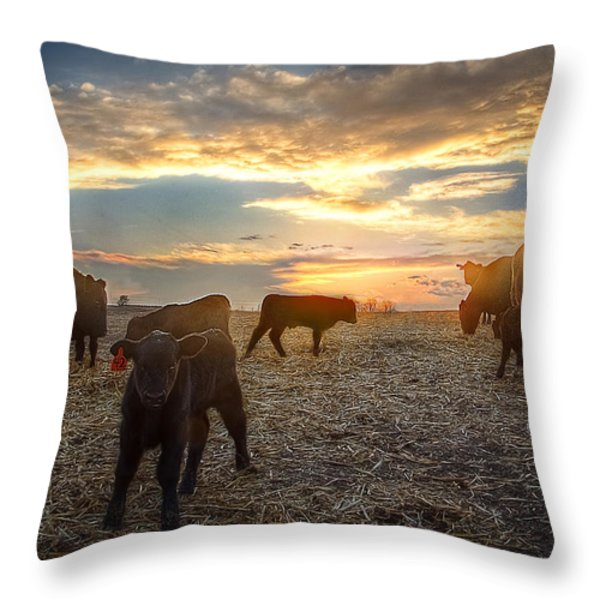 Cattle Sunset 2 Throw Pillow by Thomas Zimmerman