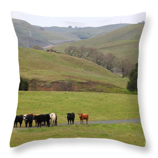 Cattles at Fernandez Ranch California - 5D21062 Throw Pillow by Wingsdomain Art and Photography