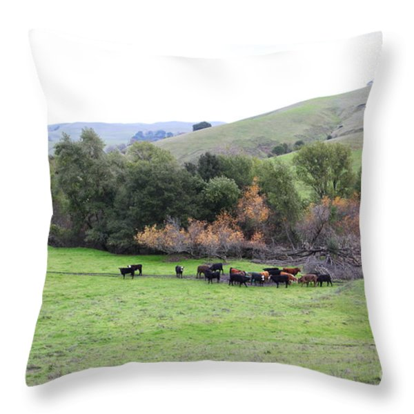 Cattles at Fernandez Ranch California - 5D21070 Throw Pillow by Wingsdomain Art and Photography