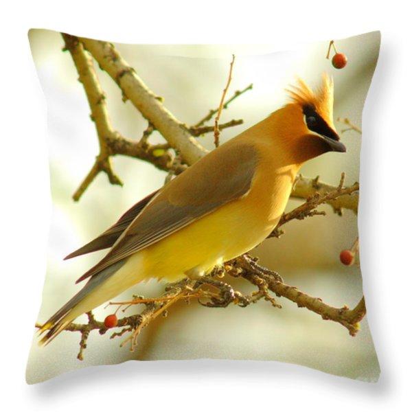 Cedar Waxwing Throw Pillow by Robert Frederick