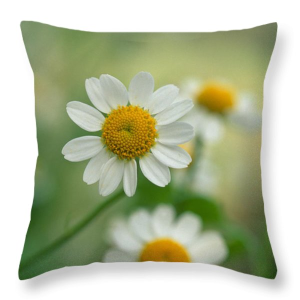 Chamomile Throw Pillow by Kathy Yates