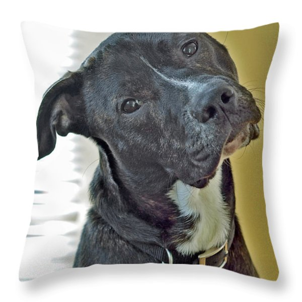 Charlie Throw Pillow by Lisa  Phillips