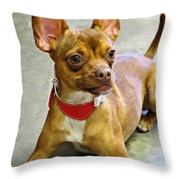 Charm Personality And Good Looks Throw Pillow by Ella Kaye Dickey