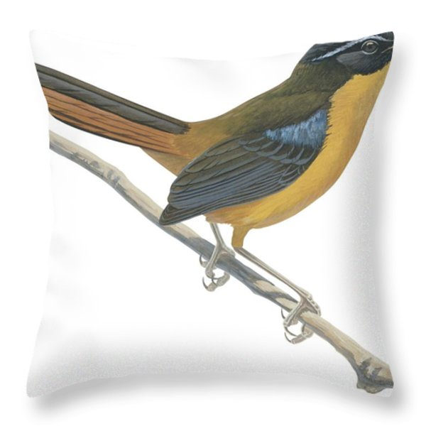 Chat Thrush  Throw Pillow by Anonymous