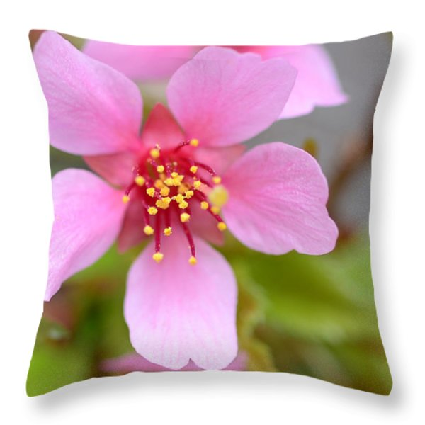 Cherry Blossom Throw Pillow by Lisa  Phillips