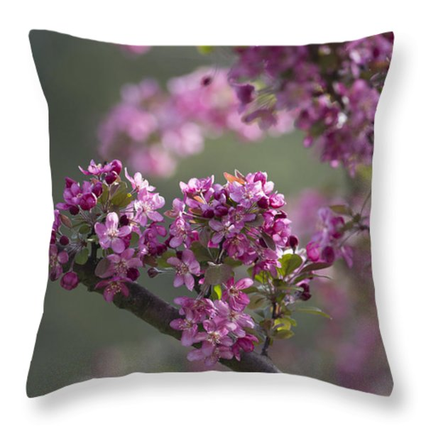 Cherry Blossoms Throw Pillow by Dale Kincaid