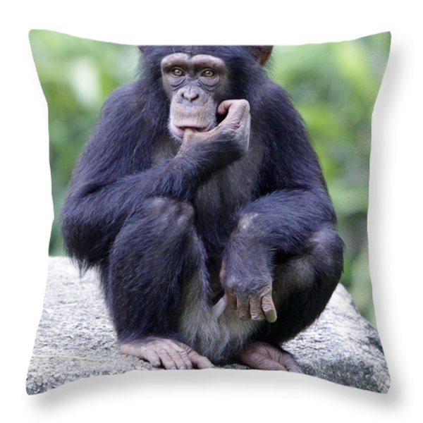 Chimp Sucking His Thumb Throw Pillow by Shoal Hollingsworth