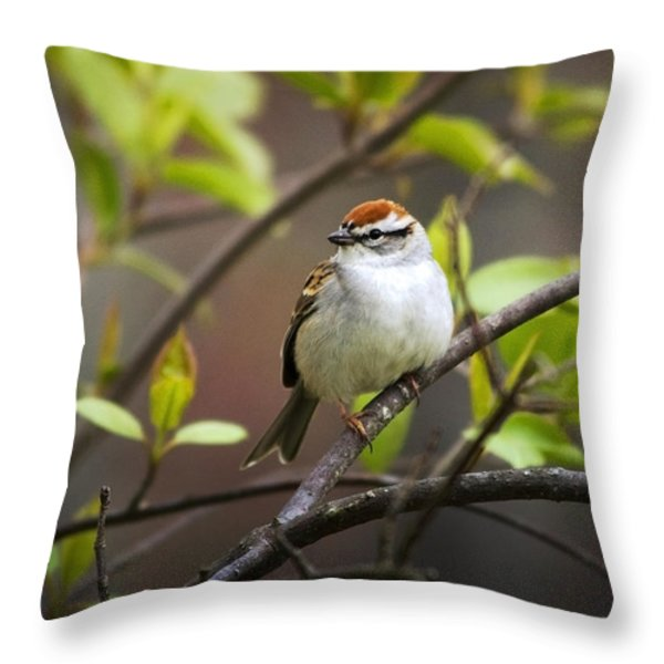 Chipping Sparrow Throw Pillow by Christina Rollo