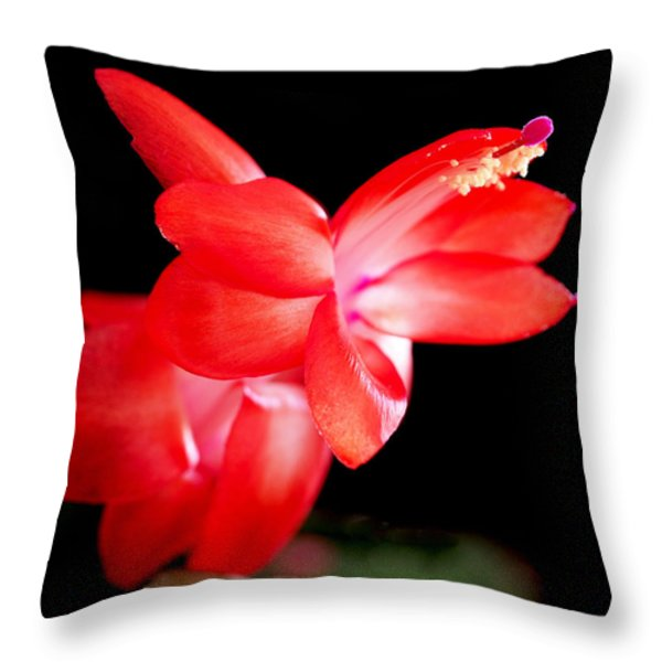 Christmas Cactus Flower Throw Pillow by Rona Black