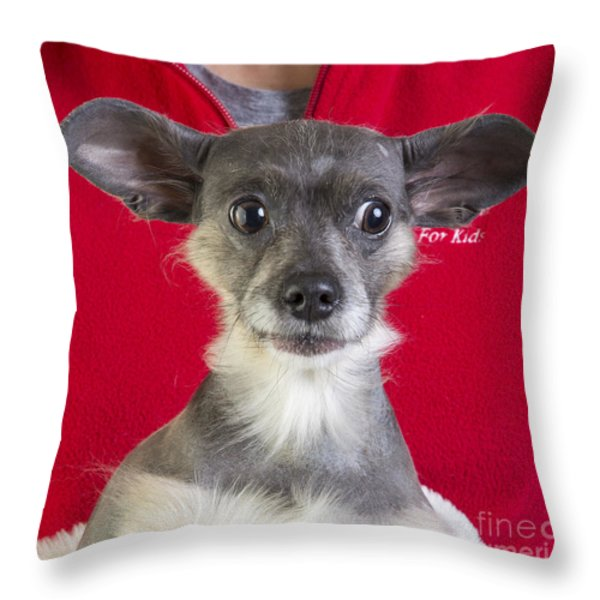 Christmas Dog Throw Pillow by Edward Fielding