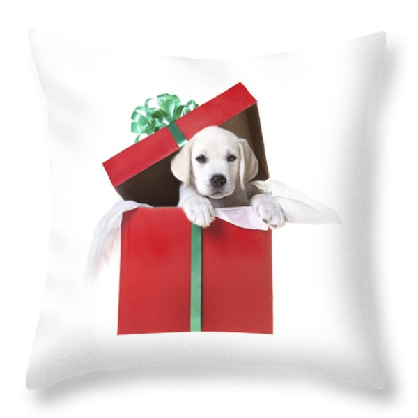 Christmas Puppy Throw Pillow by Diane Diederich