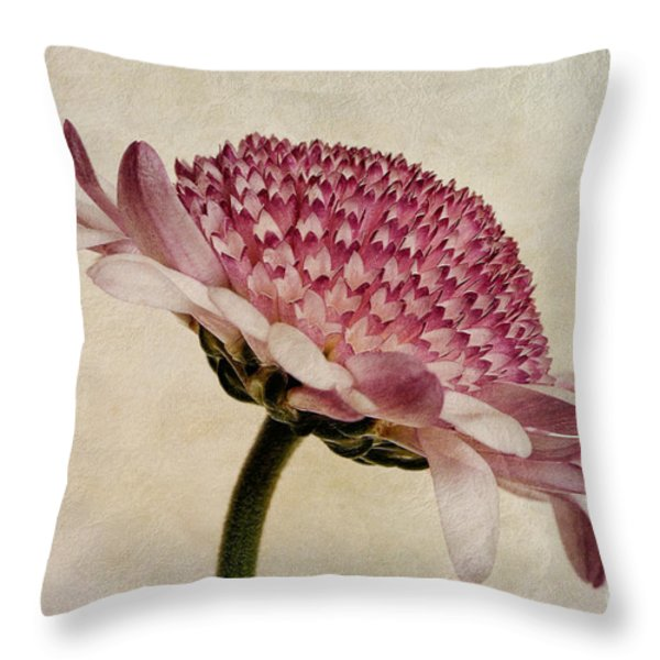 Chrysanthemum Domino Pink Throw Pillow by John Edwards