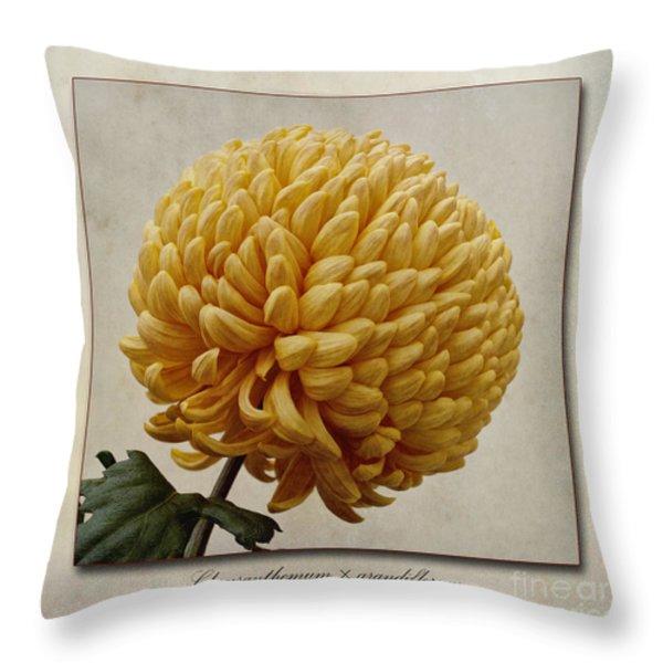 Chrysanthemum Grandiflorum Yellow Throw Pillow by John Edwards