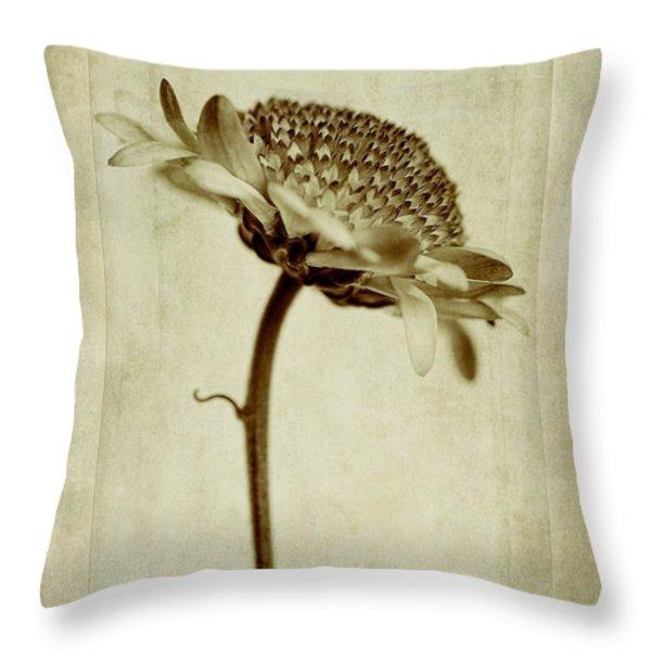 Chrysanthemum in Sepia Throw Pillow by John Edwards