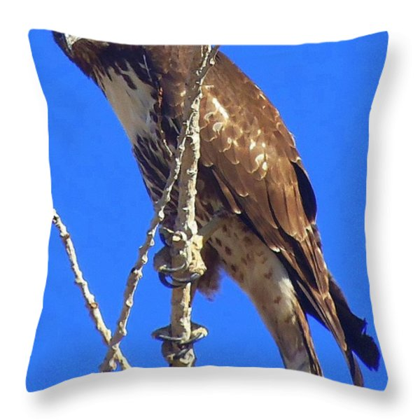 Close Up  Throw Pillow by Bobbee Rickard