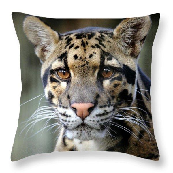 Clouded Leopard Portrait Throw Pillow by Randy Matthews