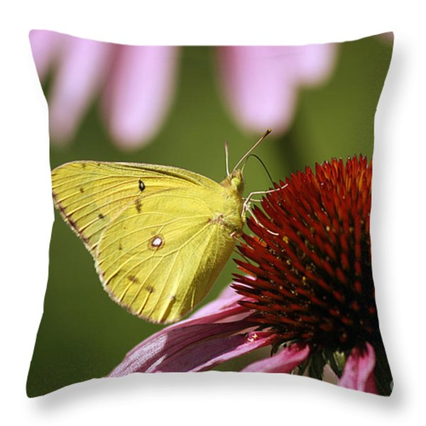 Clouded Sulphur Throw Pillow by Cindi Ressler