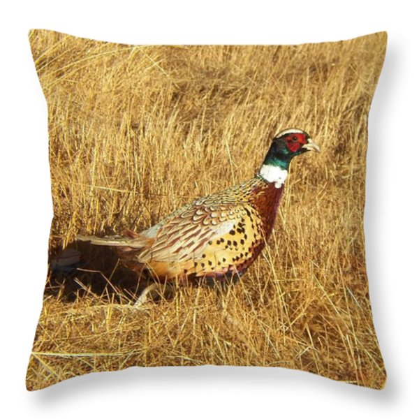 Cock Ringneck Pheasant Throw Pillow by Laurie Kidd