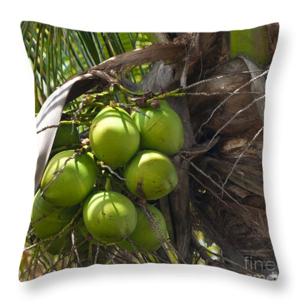 Coconuts Proliferate Throw Pillow by Michelle Wiarda