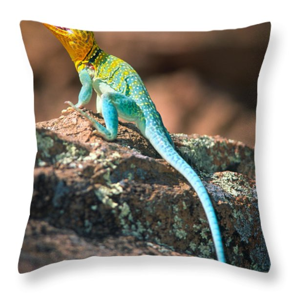 Collared Lizard Throw Pillow by Inge Johnsson