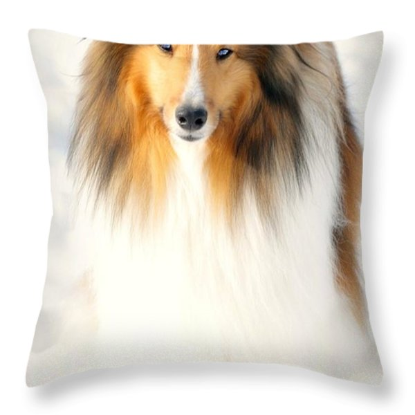 Collie  Throw Pillow by Diana Angstadt