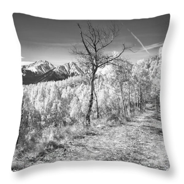 Colorado Backcountry Autumn View BW Throw Pillow by James BO  Insogna