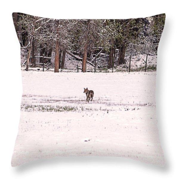 Colorado Coyote Play Throw Pillow by Janice Rae Pariza
