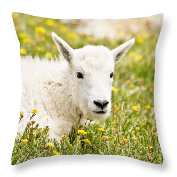 Colorado Kid Throw Pillow by Scott Pellegrin