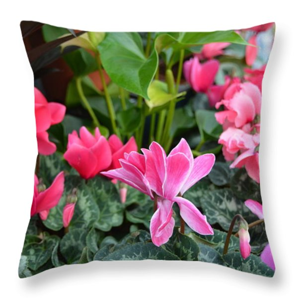 Colorful Cyclamen Throw Pillow by Carla Parris