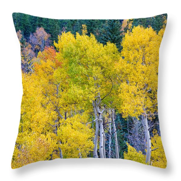 Colorful Forest Throw Pillow by James BO  Insogna