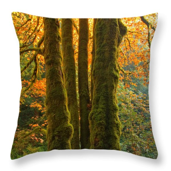 Colors In The Rainforest Throw Pillow by Adam Jewell