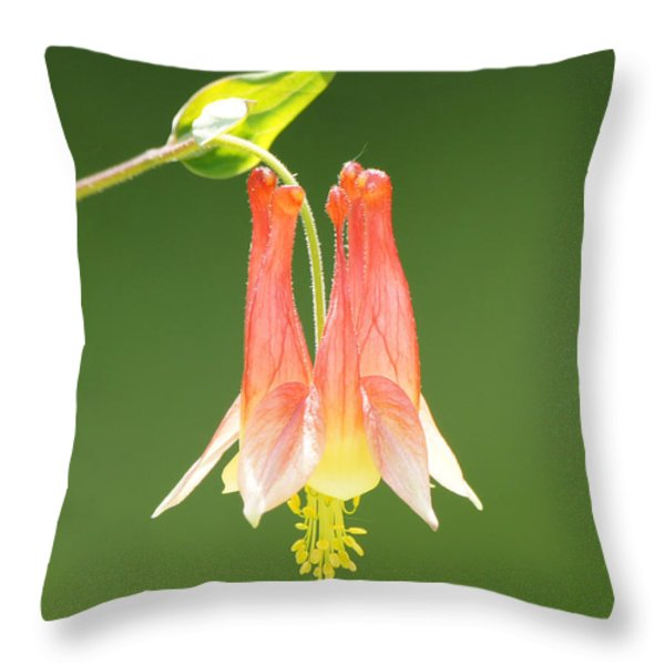 Columbine Flower in Sunlight Throw Pillow by Robert E Alter Reflections of Infinity