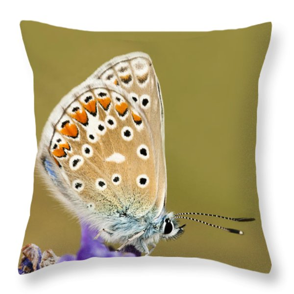 Common Blue Throw Pillow by Anne Gilbert