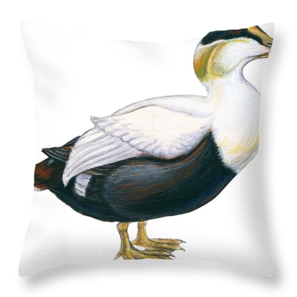 Common Eider Throw Pillow by Anonymous